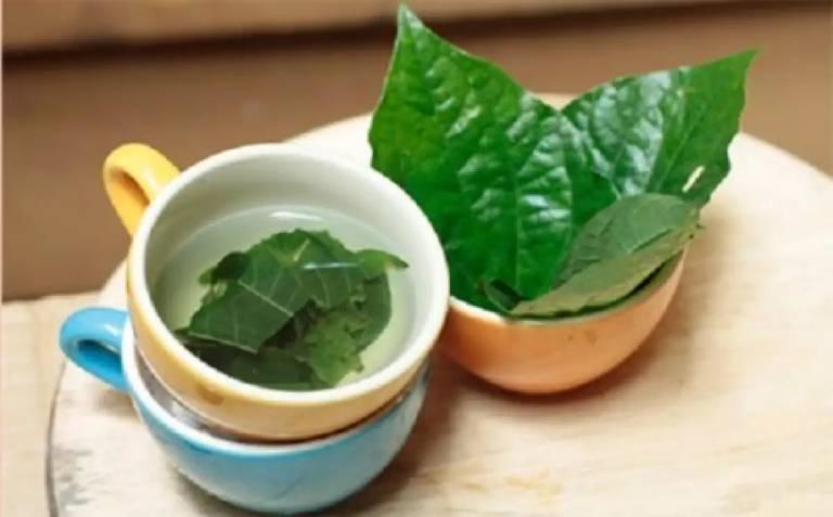 Dùng nước lá lốt súc miệng chữa bệnh lý
