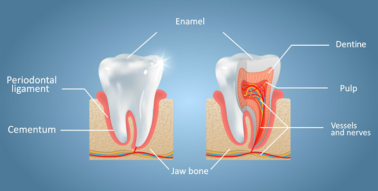 men răng là gì
